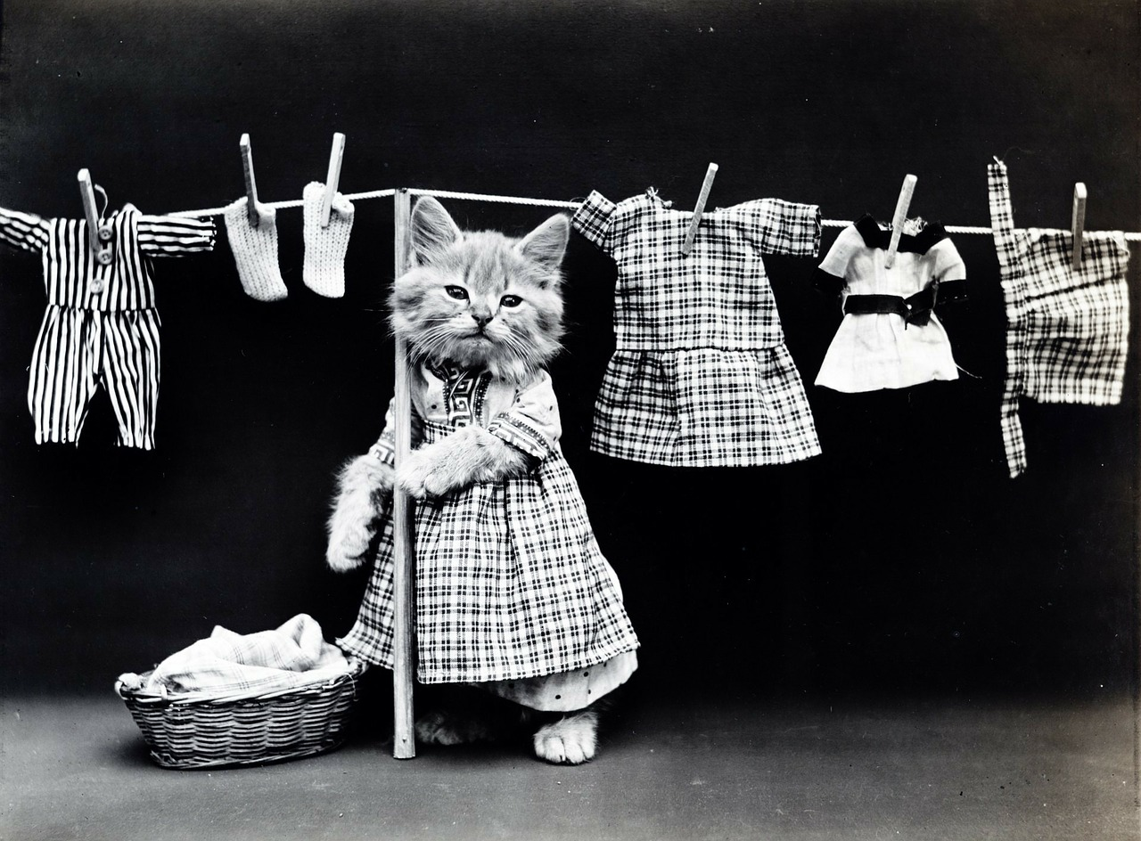 Cat doing laundry